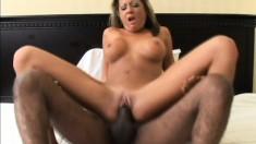 Elegant brunette with marvelous big boobs gets banged by a black stud