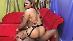 Chubby ebony lady in fishnets takes a black rod in her cunt from behind